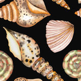 A pattern with the watercolor shells. A seamless pattern with the  shells, painted in a watercolor on a black background Royalty Free Stock Images