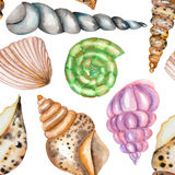 A pattern with the watercolor shells Royalty Free Stock Photos