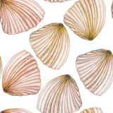 A pattern with the watercolor shells Stock Images