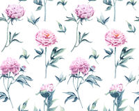 A pattern from a watercolored botanical illustration of pions. Seamless pattern with rows of variations of peonies watercolor on a white background Stock Photography