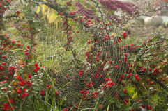 Pattern of the web in the garden Stock Images