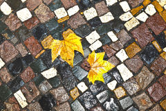 Pattern of wet cobble stone with leaf Stock Images