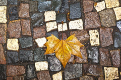 Pattern of wet cobble stone  with leaf Royalty Free Stock Image