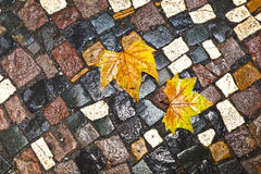 Pattern of wet cobblestones with leaves Stock Image