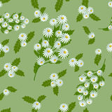 Pattern white daisies. Seamless pattern white daisies with leaves on green background, vector illustration Royalty Free Stock Image