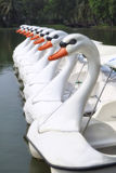 Pattern of white duck boats Stock Photography