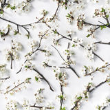 Pattern with white flowers and branches white background Stock Photos