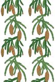 Pattern white pine tree with pine cones. Seamless pattern with a branch of pine tree and cones on white background Royalty Free Stock Images