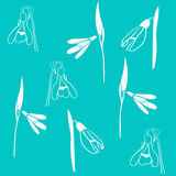 Pattern of white snowdrops on turquoise background Royalty Free Stock Photo