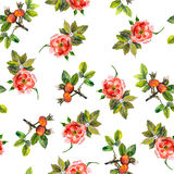 Pattern with wild pink roses Stock Photography
