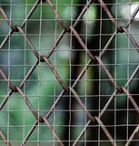 Pattern of wire fence Royalty Free Stock Image