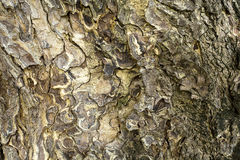 Pattern of wood bark or tree shell created background and texture. Stock Images