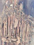 Pattern of wood decay Stock Photography
