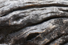 Pattern of wood decay texture background Royalty Free Stock Photography