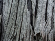 Pattern of wood Stock Photography