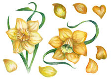 A pattern with a yellow daffodil Royalty Free Stock Photography