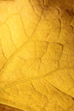 Pattern of a yellow leaf. Stock Image