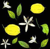 Pattern with yellow lemons white flowers and leafs on black background. Made in bright colors vector illustration