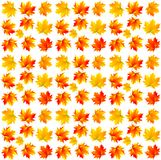 Pattern of yellow maple leaves Stock Photography