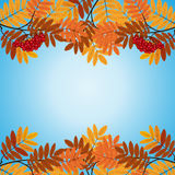 Pattern with yellow and red leaves Stock Photos