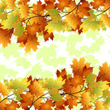 Pattern with yellow and red leaves. On a white background Royalty Free Stock Photo