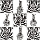 Pattern zebras for textiles Stock Photo