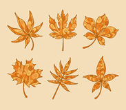 Patterned Autumn Maple Leaves Royalty Free Stock Image