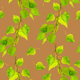Patterned backdrop with green leaves ob birch branches Royalty Free Stock Photography