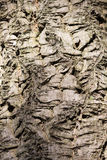 Patterned bark texture Royalty Free Stock Images