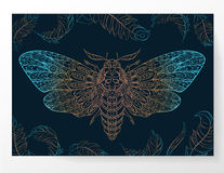 Patterned butterfly. Stock Photos