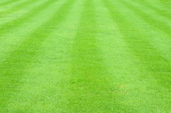 Patterned field of green grass sports field Royalty Free Stock Image