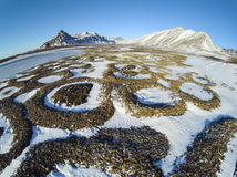 Patterned ground - Spitsbergen, Arctic Royalty Free Stock Images
