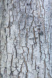 Patterned of grunge tree peel,wood texture, nature, plant backgr Royalty Free Stock Image