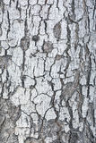 Patterned of grunge tree peel,wood texture, nature, plant backgr Stock Image