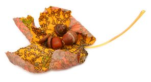 Patterned maple leaf & acorns Stock Photography