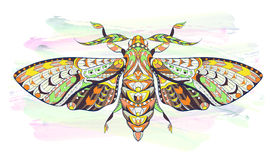 Patterned moth on the grunge background. Ornate butterfly. Stock Photos