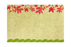 Patterned paper. Frangipani flowers and leaves Stock Images