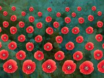 Patterned Poppies Collage on Textured Background Stock Photography