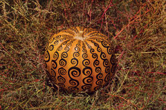 Patterned Pumpkin. A pumpkin decorated with a spiral pattern in black color Stock Image