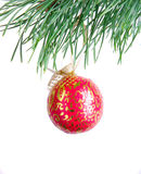 Patterned red ball on fir branch Royalty Free Stock Image