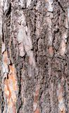Patterned structured pinewood tree trunk bark, Germany, closeup, details royalty free stock photography
