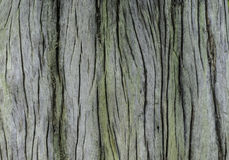 Patterned surface of dead trees. Royalty Free Stock Photos