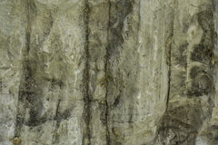 Patterned surface of the limestone. Stock Image