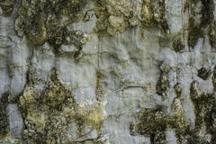 Patterned surface of the stone. Stock Photography