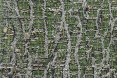 Patterned surface of the tree is still alive. Royalty Free Stock Photography