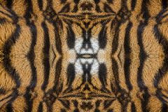 Patterned and texture of tiger. Patterned and texture of tiger for background royalty free stock images