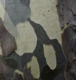 Patterned Tree Bark. Royalty Free Stock Photo