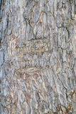 Patterned of tree peel,wood texture, nature, plant background Royalty Free Stock Photos