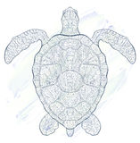 Patterned turtle Stock Photo