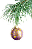 Patterned violet ball on fir branch royalty free stock image